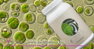 Chlorella alga tabletta Liavit Green Life Chlorella Alga tabletta