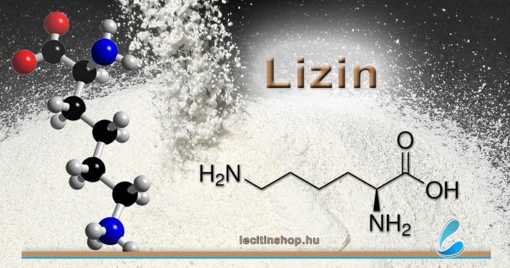 lizin l-lizin esszenciális aminosav